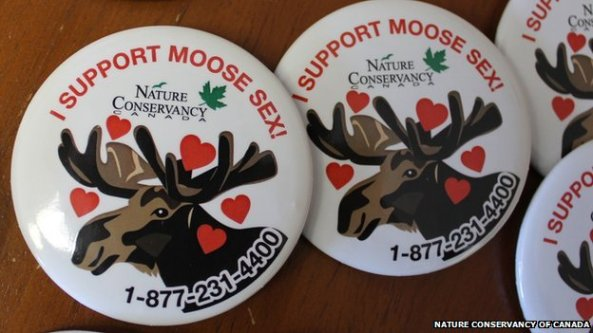 _73510716_moosesexbuttons